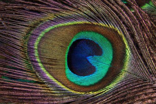 oog van een pauw